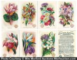 Arm & Hammer Flower Card Set