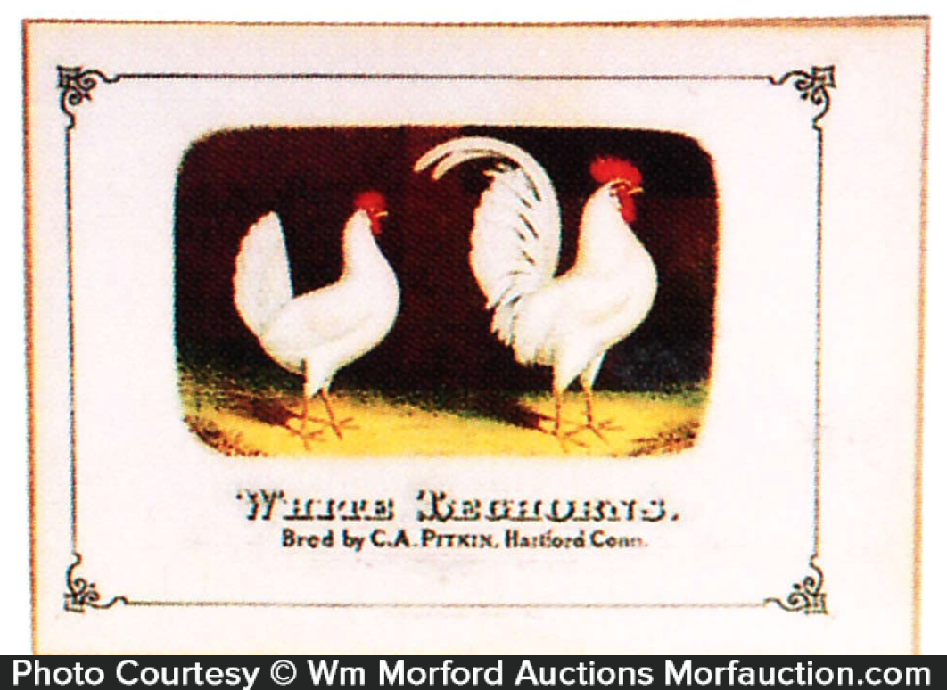 White Leghorn Chickens Sign