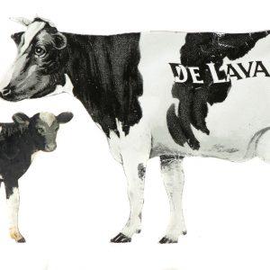 De Laval Holstein Cows